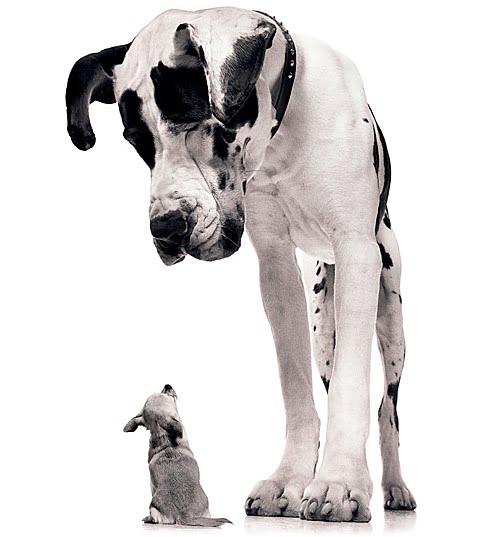 conseil éducation tous chiens