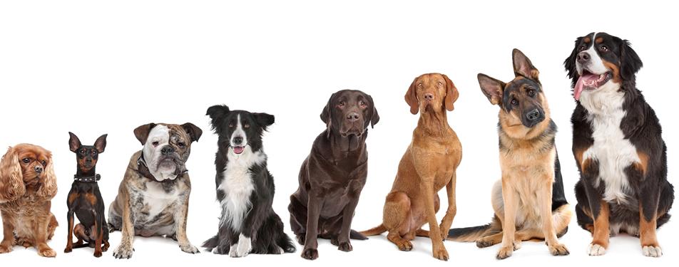 contactez moi races de chien