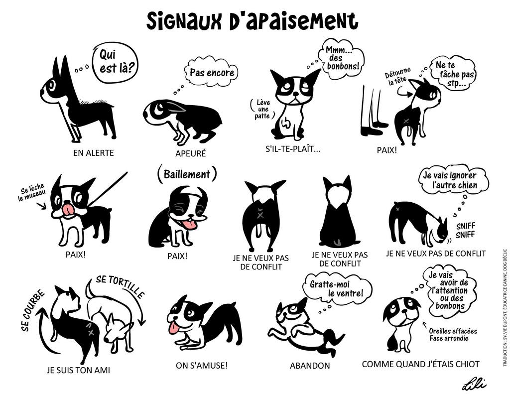 Signaux d'apaisement chien