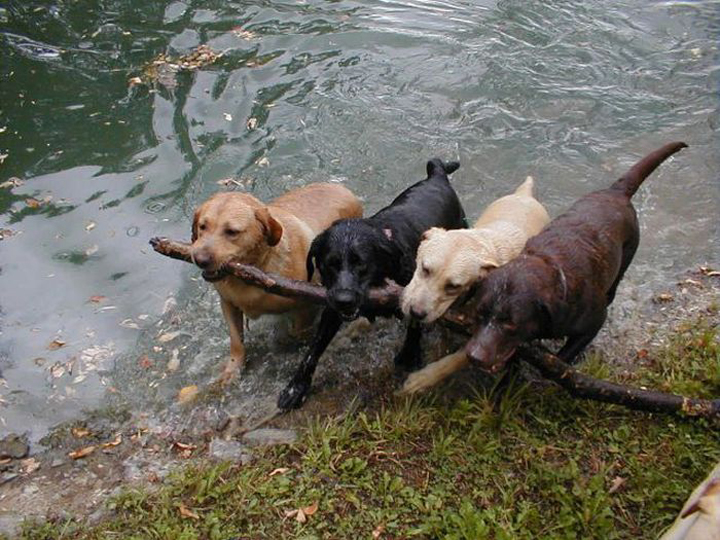 chien baton partage