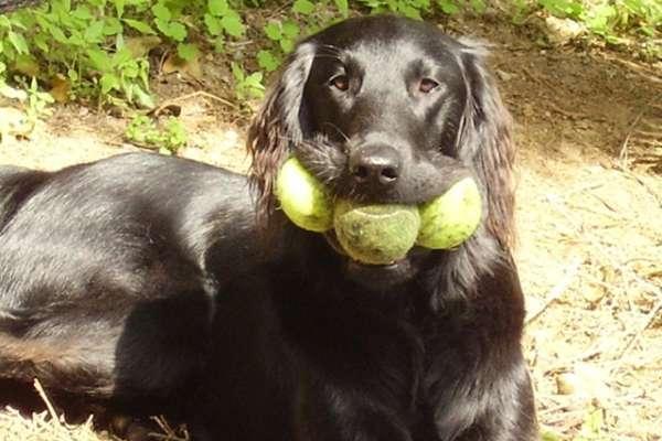 chien partage de ressource
