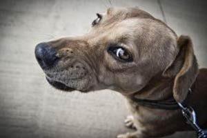 Chien qui grogne : pourquoi et que faire quand mon chien