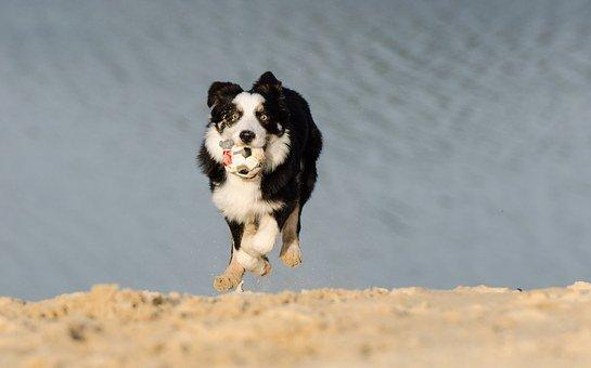 emmener son chien à la plage